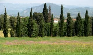 Lovely Tuscan countryside in the spring