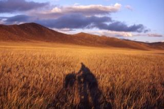 sunset light in steppe