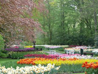 Keukenhoff Gardens (47,000 acres containing 8 million tulips)